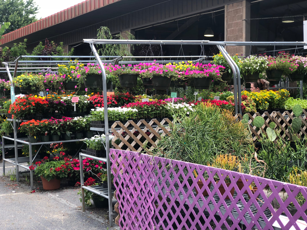 Potted Plants | State Farmers Market | Things to do in Raleigh, NC
